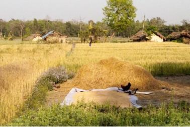 Paysage du Népal où se trouvent les fermes avec qui nous travaillons
