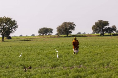 Productrice d'épices bio dans son champs avec qui Epices Shira travaille. Gujarat, Inde.