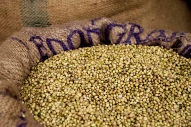 Gros sac en toile de jute ouvert, contenant de coriandre bio séchée au soleil de manière naturelle
