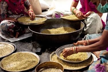 Tri de graines de coriandre bio dans la ferme du producteur Du Gujarat, en Inde, avec qui nous collaborons