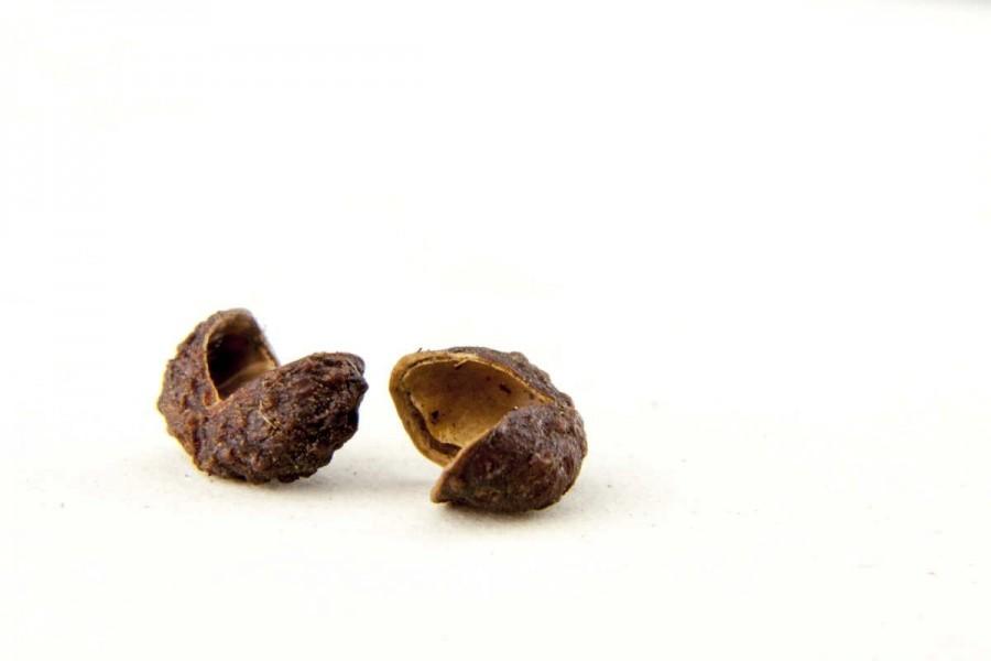 Timur bio et sauvage (zanthoxylum armatum, poivre pamplemousse, timur) du Népal sélectionné par Epices Shira