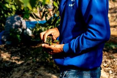 Producteur d'épices bio sur l'île de Sulawesi, en Indonésie avec qui Epices Shira collabore