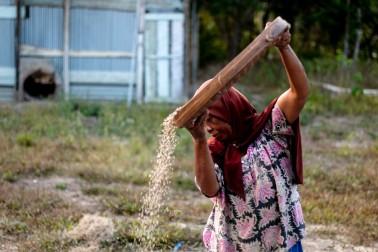 Productrice d'épices bio en train de trier le poivre sur l'île de Sulawesi, en Indonésie