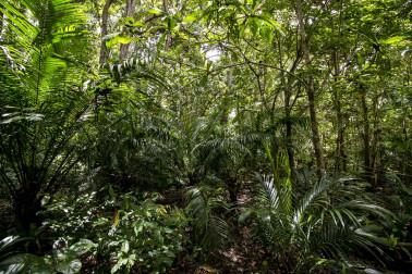 Jungle de l'île de Pemba, à Zanzibar chez le producteur avec qui nous collaborons