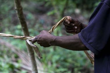 Gros plan sur le producteur d'épices en train d'attacher un piquet, Pemba sur l'île de Pemba, à Zanzibar