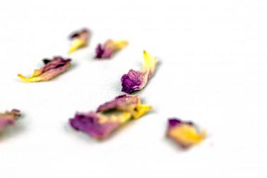 Pétales de rose d'Ispahan (rosa damascena, rose de Damas) récoltés dans la région d'Ispahan, en Iran