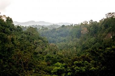 Paysage vert et vallonné de l'île de Sulawesi, en Indonésie