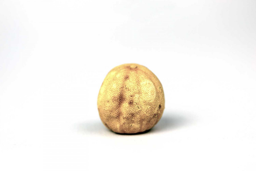 Citron blanc iranien