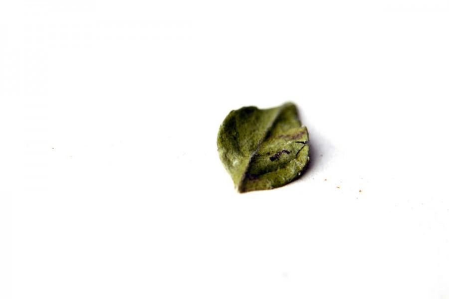 Feuilles de curry biologiques et sauvages (curry leaf, murraya koenigii) venant du Népal