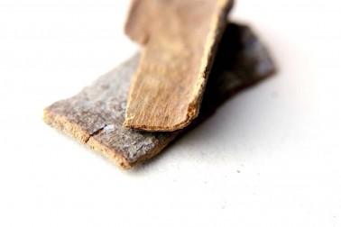 Ecorce de cannelle cassia bio et sauvage (cinnamomum tamala, cinnamon) sélectionnée par Epices Shira