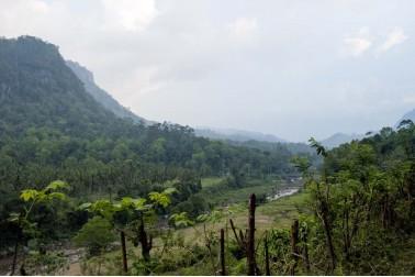 Paysage du Sri Lanka où poussent les girofliers sauvages