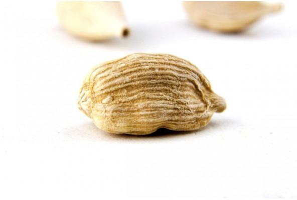 Cardamome jaune biologique (elettaria cardamomum, yellow cardamom) sélectionnée par Epices Shira