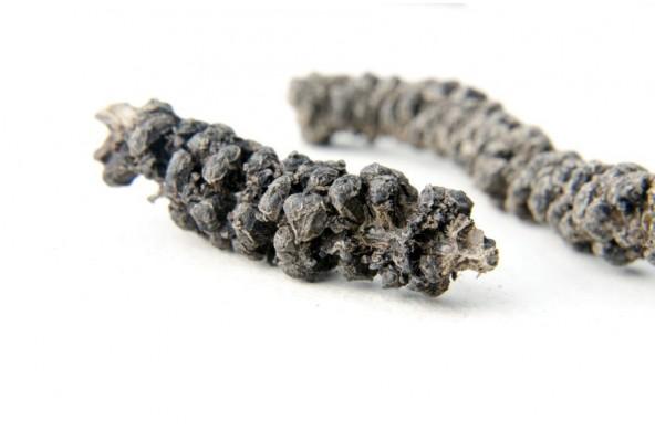 Poivre long sauvage d'Assam (piper longum, long pepper) sélectionné par Epices Shira