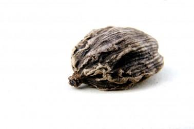 Cardamome noire bio (amomum subulatum, Nepal cardamom) du Népal, sélectionnée par Epices Shira