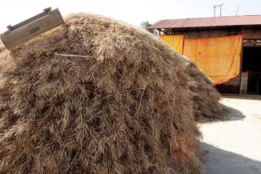 Meule de moutarde noire biologique chez le producteur d'épices avec qui nous travaillons dans le Rajasthan