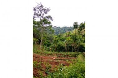 Vue de la nature verdoyante autour de la ferme du producteur avec qui Epices Shira collabore