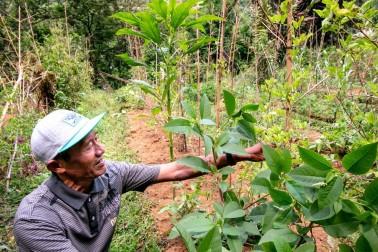 Portrait du producteur d'épices bio à Java, en Indonésie avec qui Epices Shira collabore