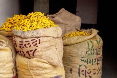 Sacs de curcuma au marché de 3 qualités différentes