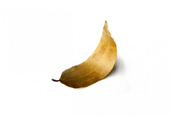 Feuilles de cannelier bio du Népal (cinnamomum tamala) sélectionnées par Epices Shira