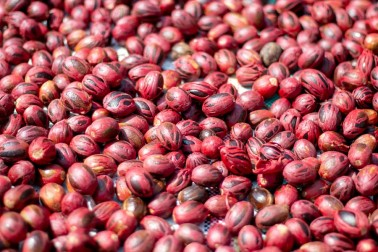 Tas de noix de muscade enveloppées de macis dans la ferme du producteur avec qui Epices Shira travaille