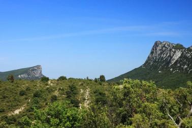 Paysage du Languedoc où pousse le laurier sauvage