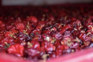 Caisse de pimentón biologiques en train dans le séchoir