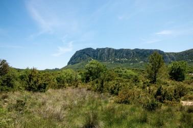 Paysage du Languedoc où pousse le romarin bio et sauvage