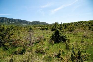 Paysage du Languedoc où pousse la sarriette bio et sauvage