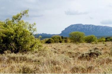Paysage du Languedoc où poussent les herbes aromatiques bio et sauvages