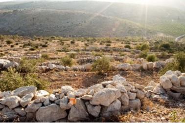 Paysage des alentours de Jénine, en Palestine où pousse le zaatar