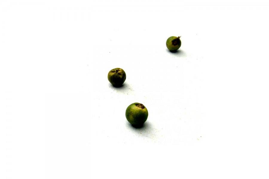 Poivre vert bio (piper nigrum) du Wayanad, en Inde sélectionné par Epices Shira