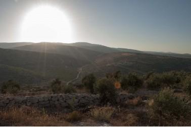 Paysage de Jénine, en Palestine où pousse le freekeh (frikeh)