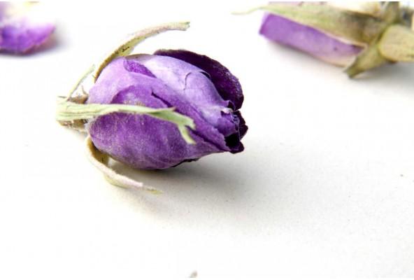 Boutons de rose d'Ispahan (rosa damascena, rose de Damas) récoltés dans la région d'Ispahan, en Iran
