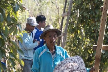 Portrait du producteur d'épices bio sur l'île de Sulawesi en Indonésie avec qui Epices Shira collabore