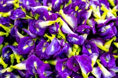 Fleurs de pois papillon de Java