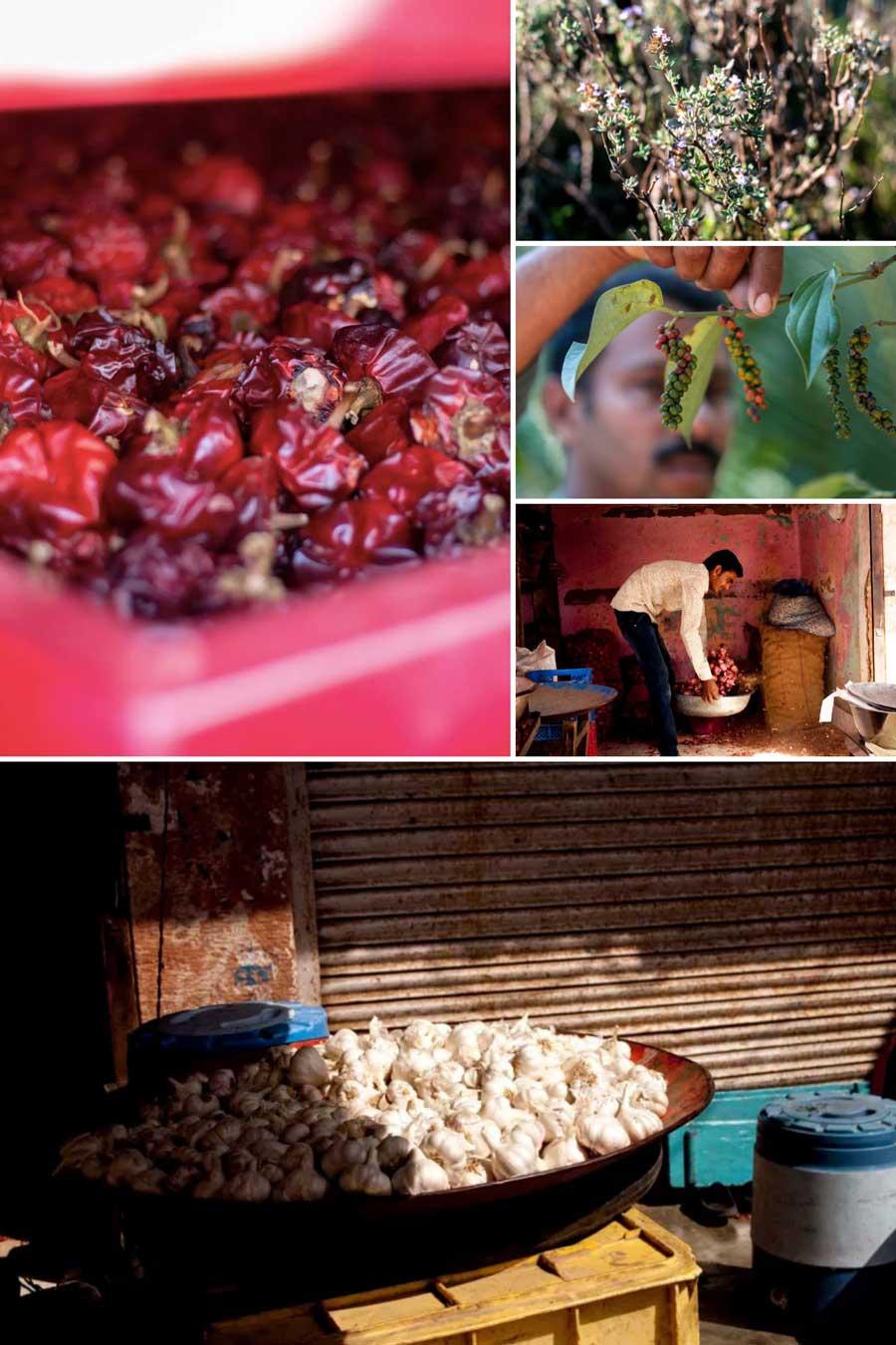 Mosaïque de photos montrant des épices sèches et fraîches qui servant à la préparation du mélange cajun