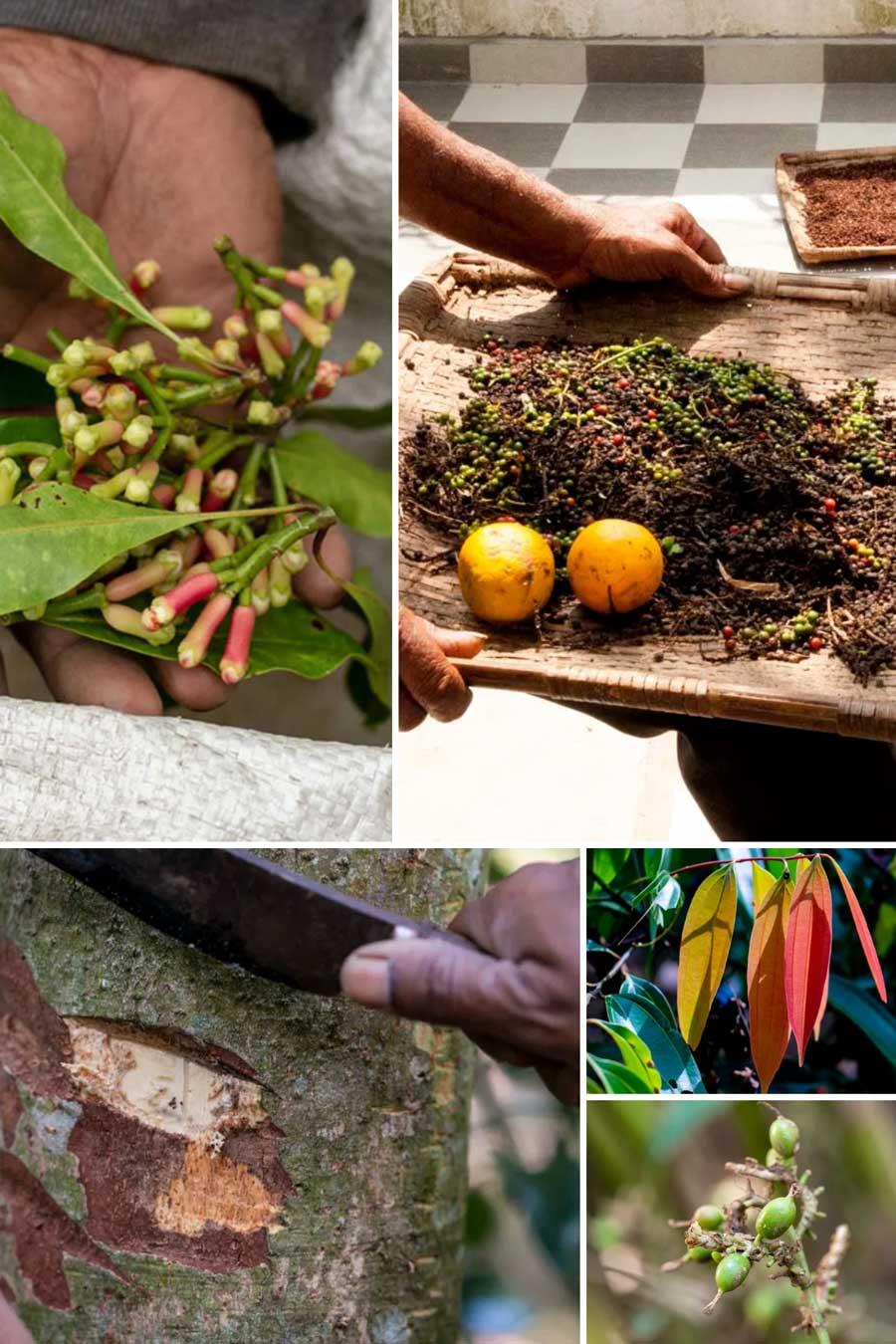 Epices fraîches et sèches utilisées pour créer le mélange curry de Madras bio
