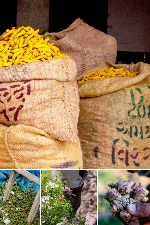 Epices fraîches et sèches utilisées pour composer le mélange curry noir
