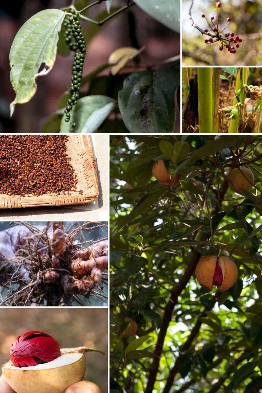 Epices fraîches et sèches servant à réaliser le garam masala biologique du Népal