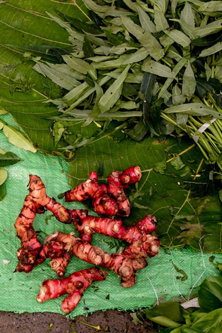 Racines de gingembre rouge posés sur une toile verte