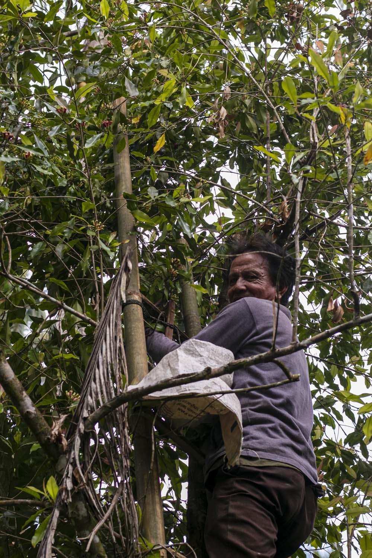 Producteur d'épices de l'île de Sulawesi, en Indonésie, avec qui nous collaborons