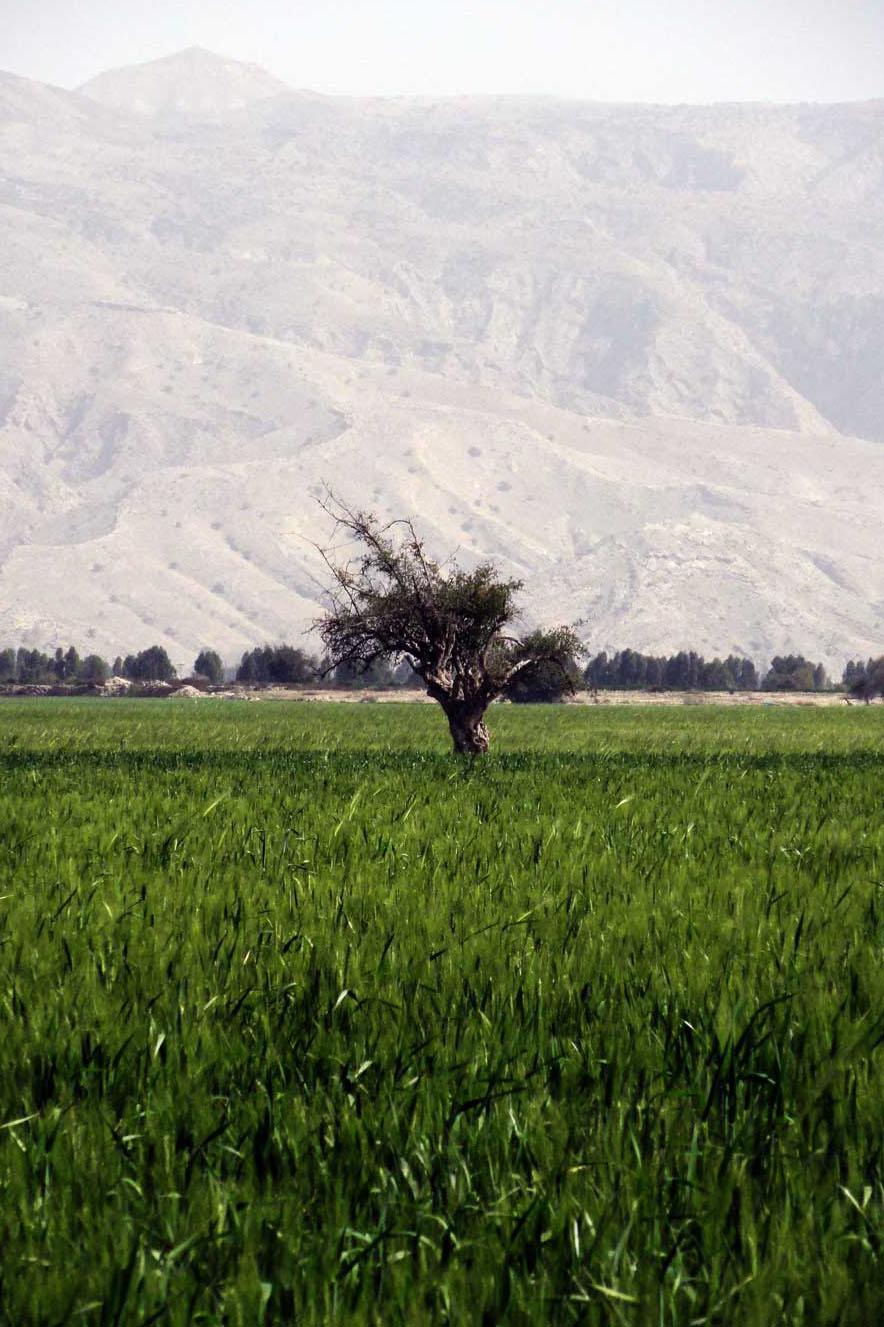 Paysage de la région de Fars, photo prise par Hadi Karimi