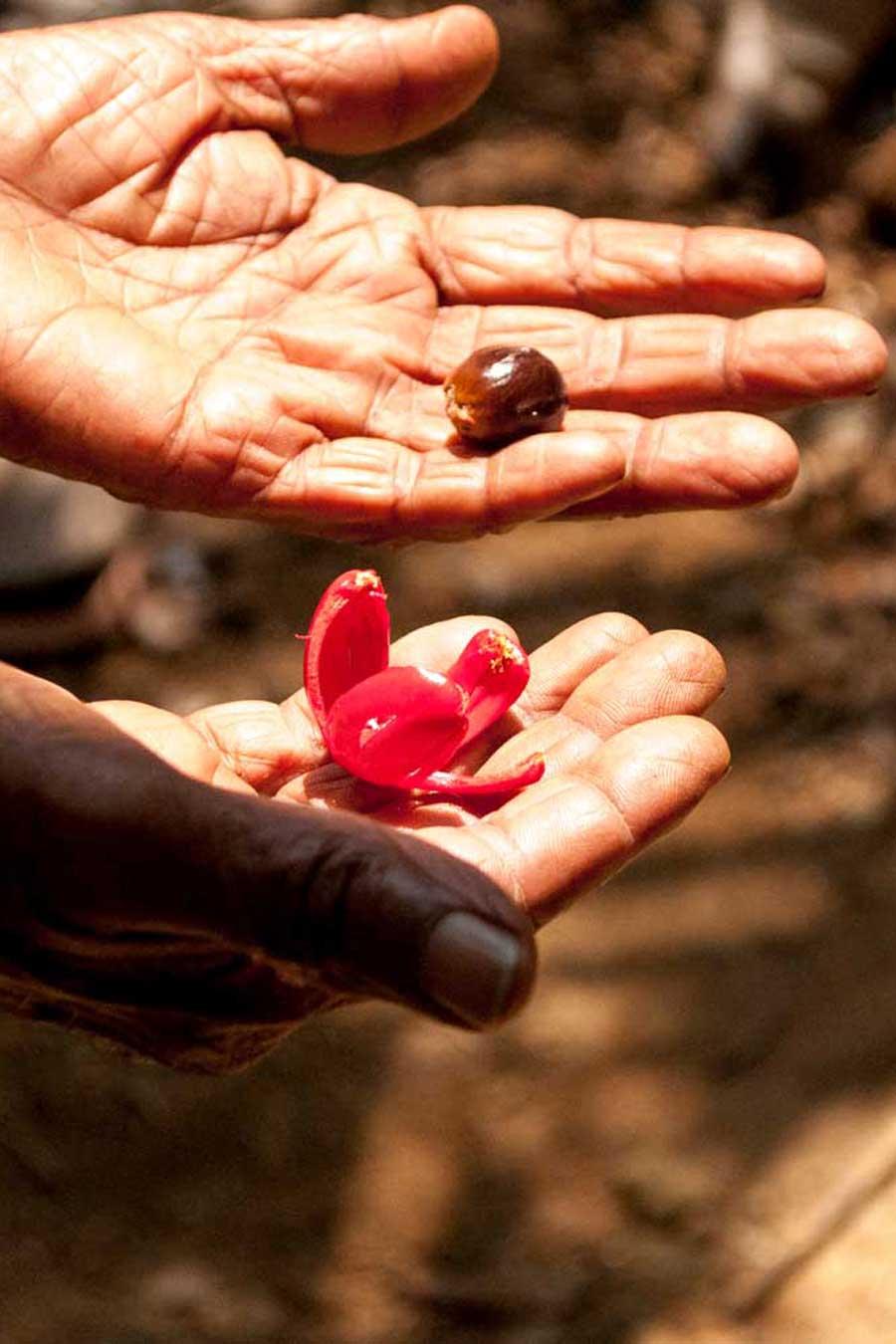 Femme tenant montrant dans une main la noix de muscade et dans l'autre le macis