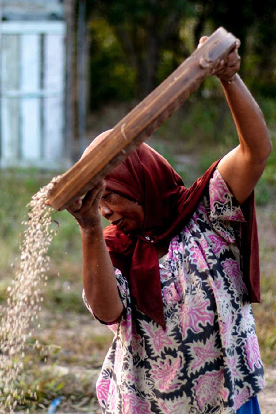 Productrice de poivre blanc biologique, sur l'île de Sulawesi, en Indonésie