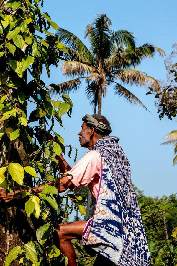 Producteur d'épices dans le Kerala, en Inde, avec qui nous collaborons