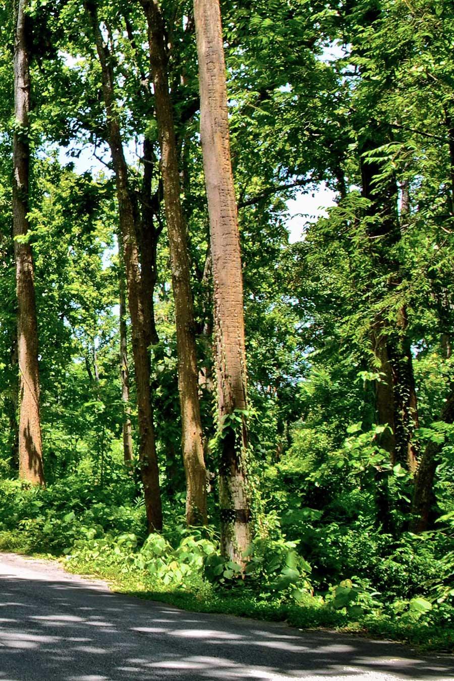 Réserve naturelle d'Assam, photo prise par Diganta Talukdar, Nagaon