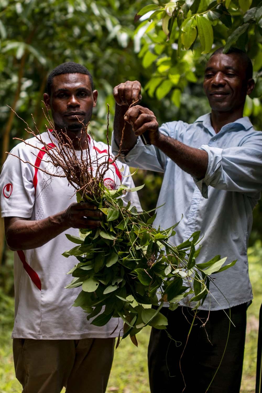 Producteur de poivre noir sur l'île de Pemba, en Tanzanie