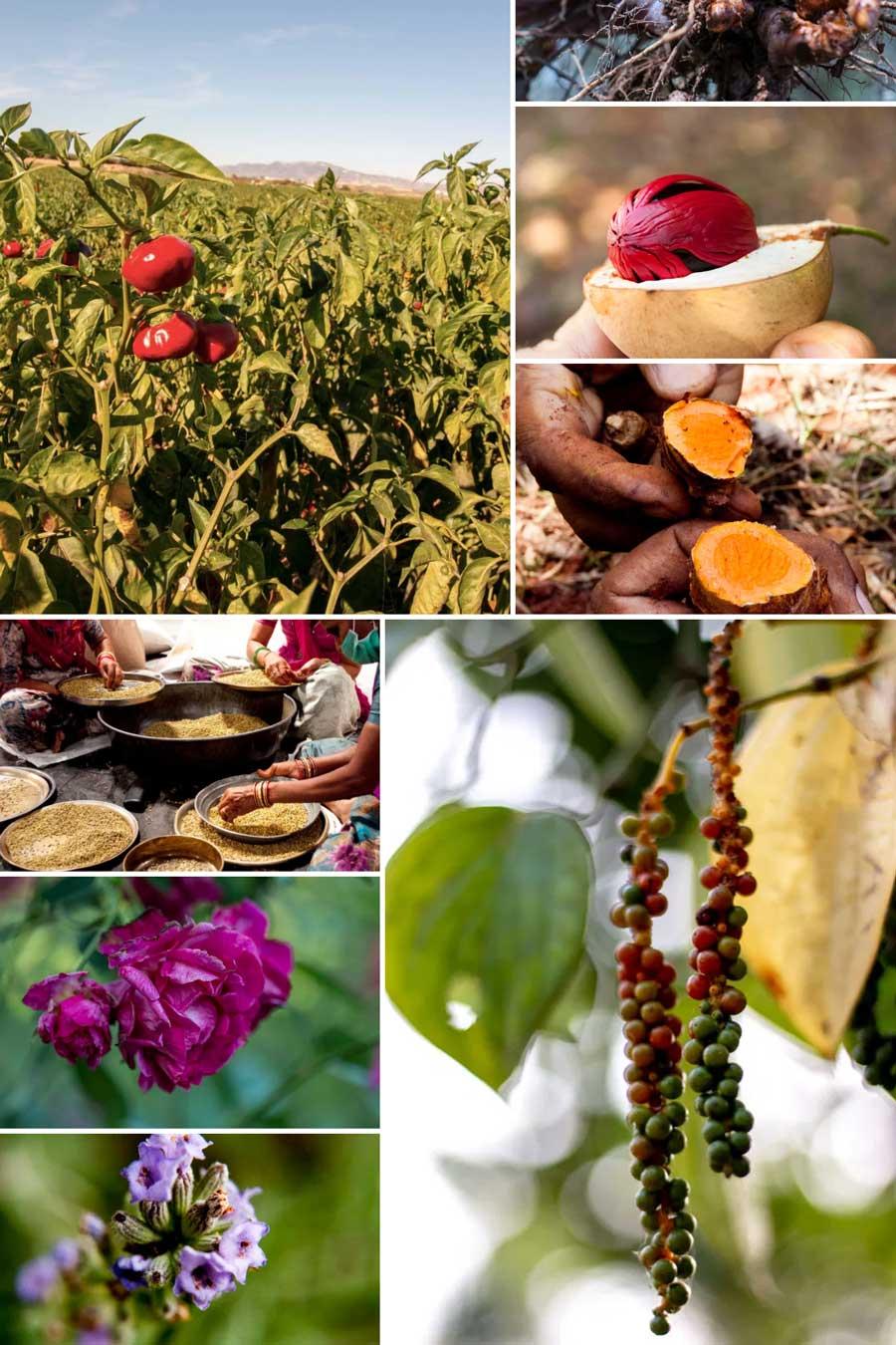 Différentes photos d'épices fraiches que nous utilisons pour composer le mélange ras el-hanout bio