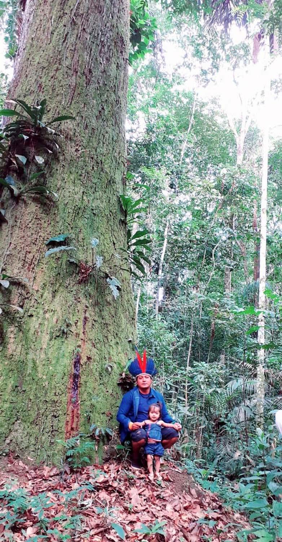 Peuple Sateré Mawé pratiquant la cueillette sauvage en Amazonie centrale