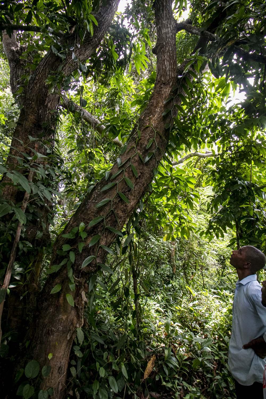 Producteur d'épices sur l'île de Pemba, sur l'archipel de Zanzibar, avec qui nous travaillons